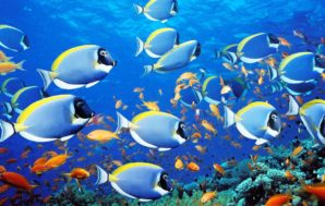 Andrew Forrest commits $100m to ocean research